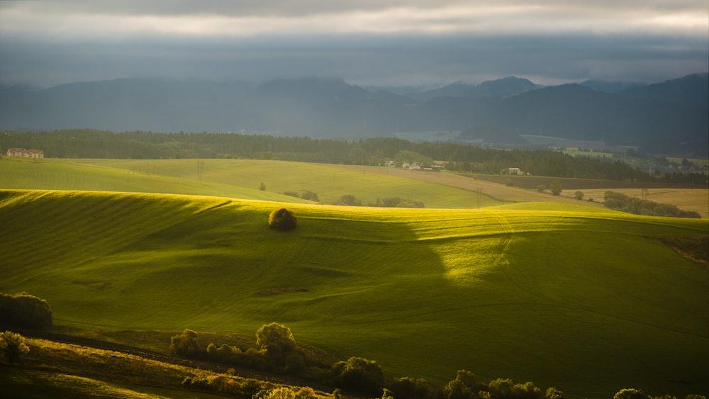 plain grass field on hill