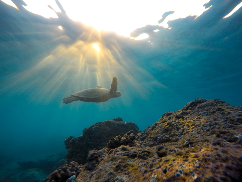 underwater photo of turtle near rock formation during daytime