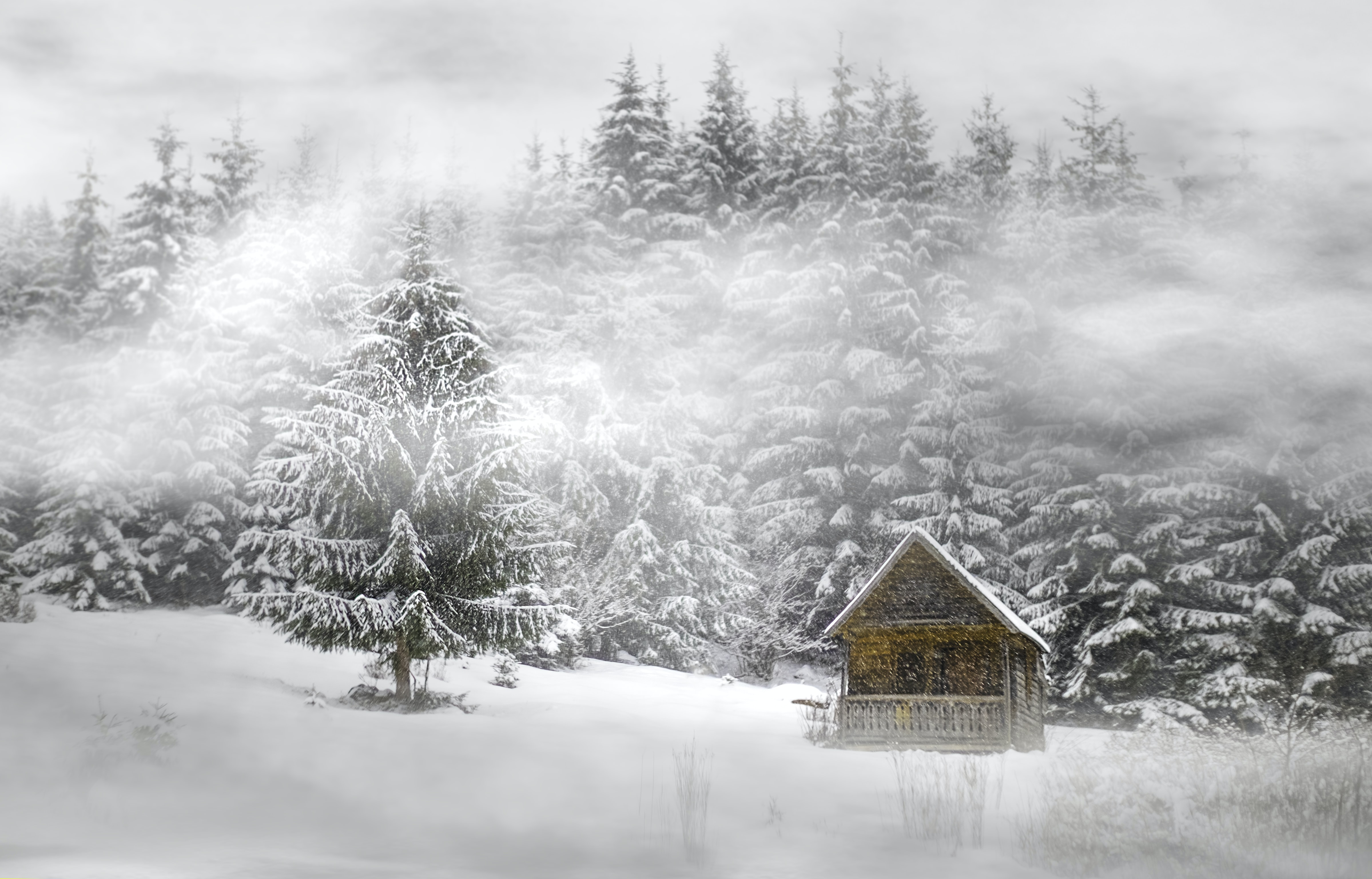 house near trees covered by snow