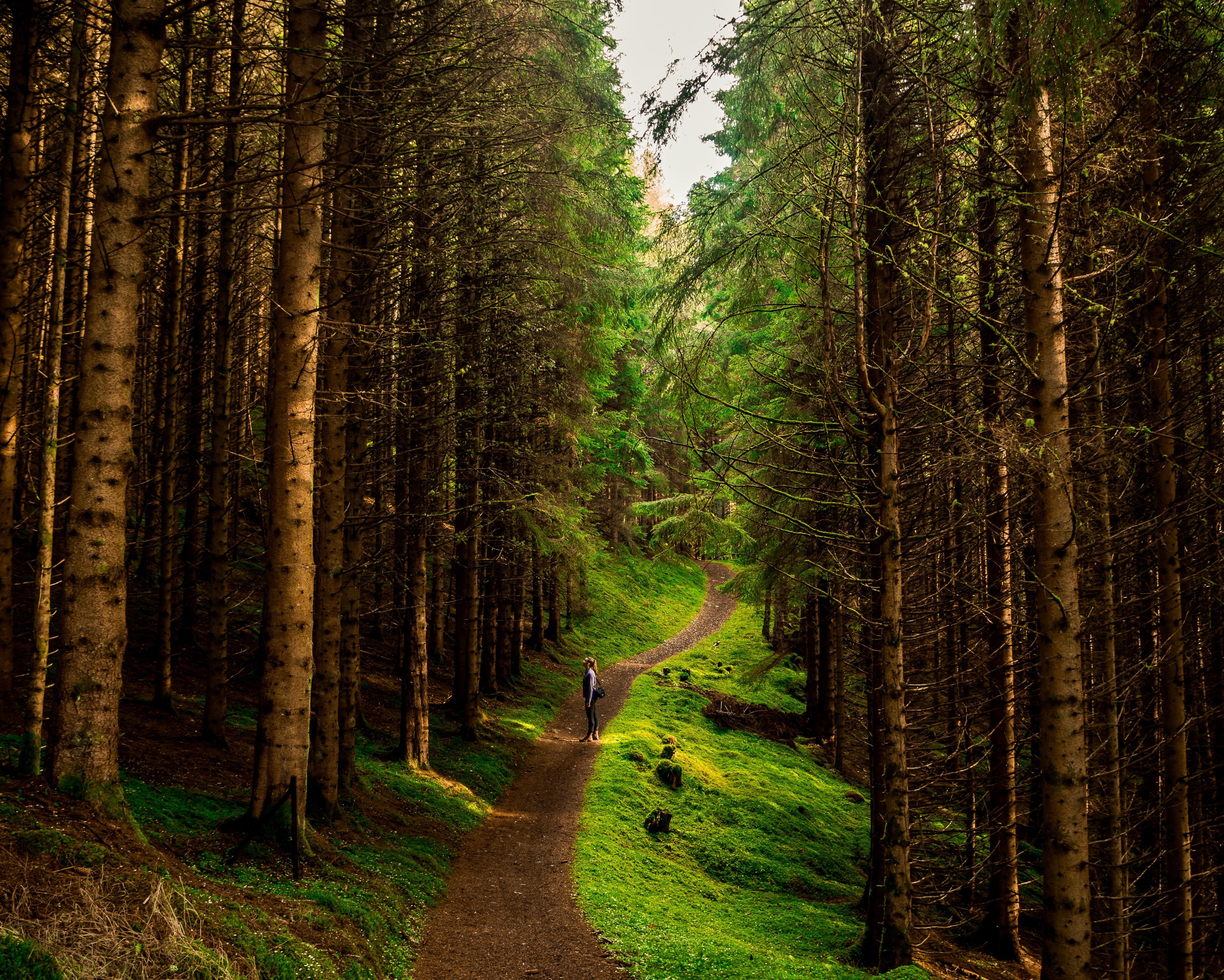 person standing on pathway between tall trees