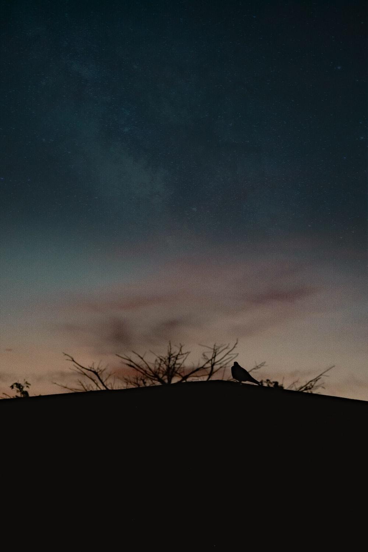 silhouette of bird during nighttime