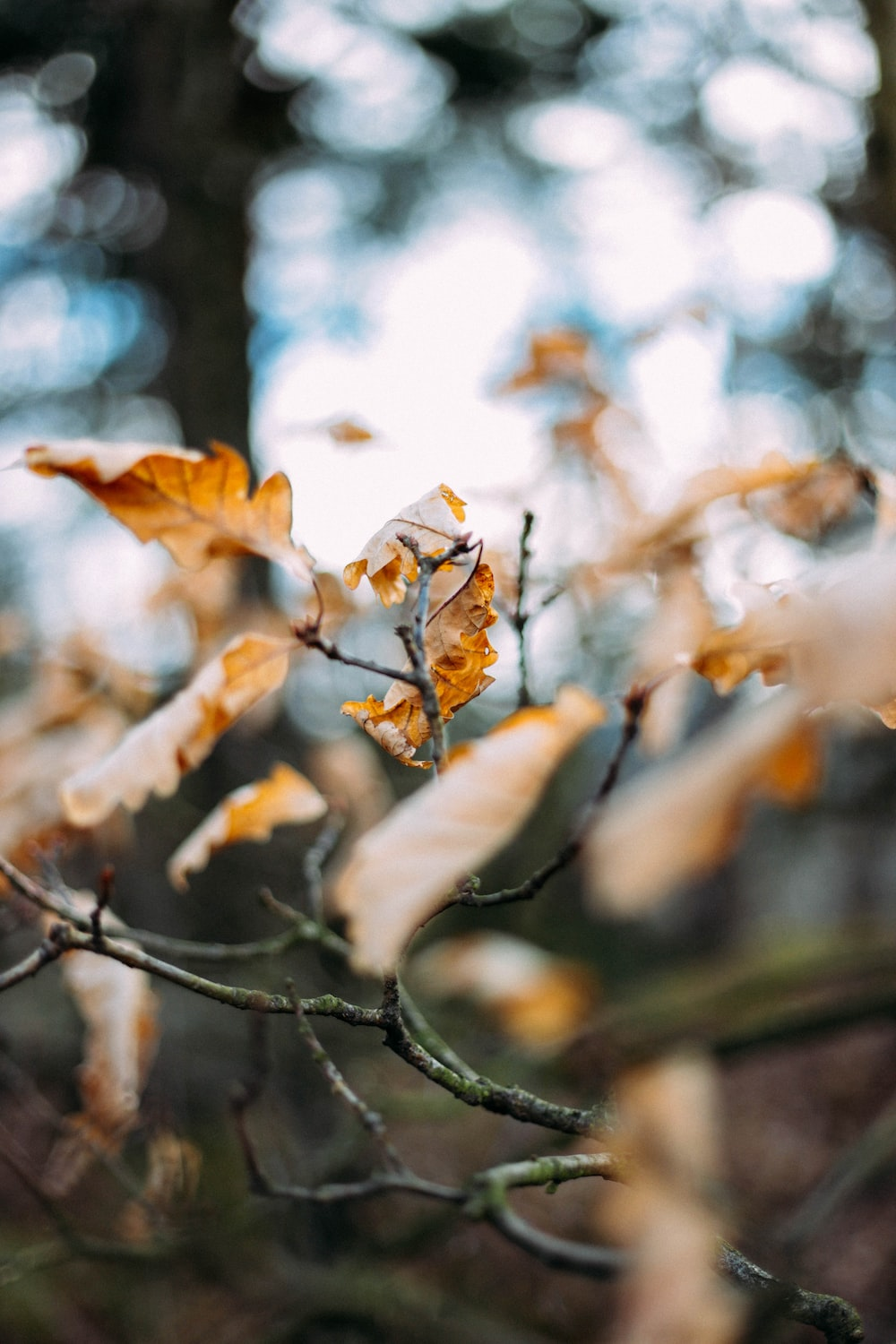 brown tree with leaf in selective focus photography