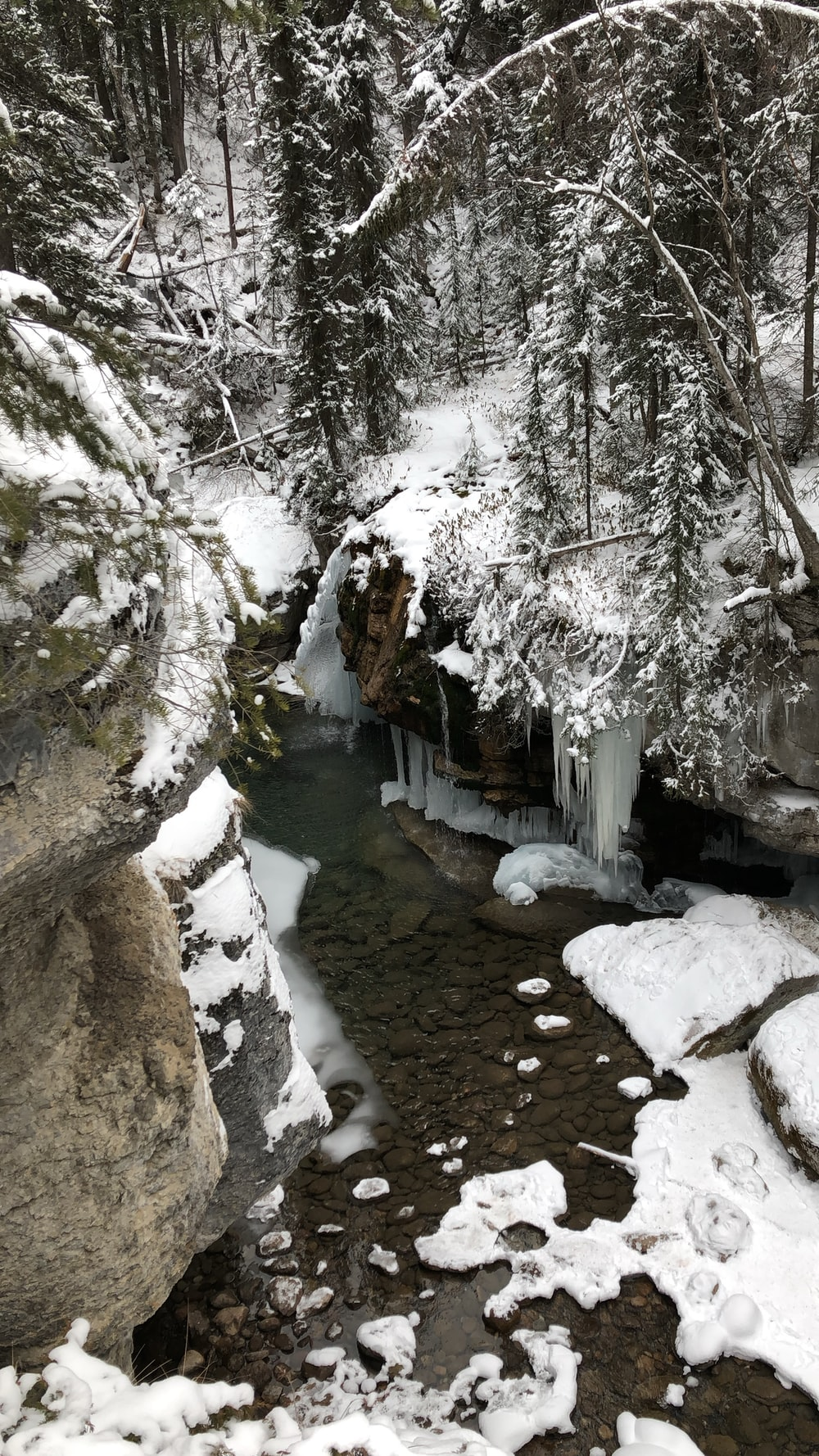 snow covered rock formations and trees