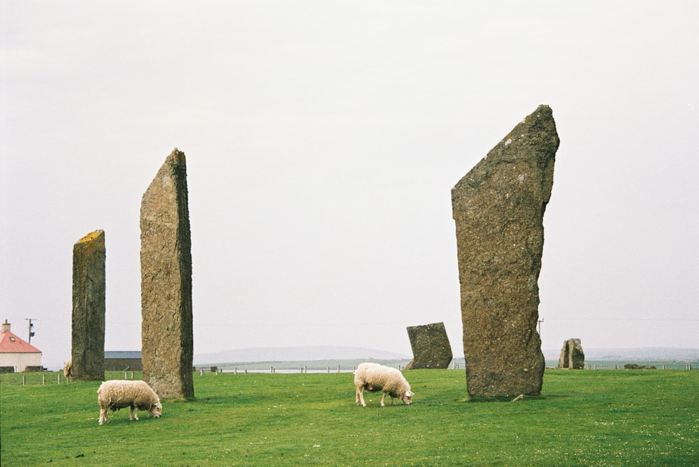 two sheep beside rock formation