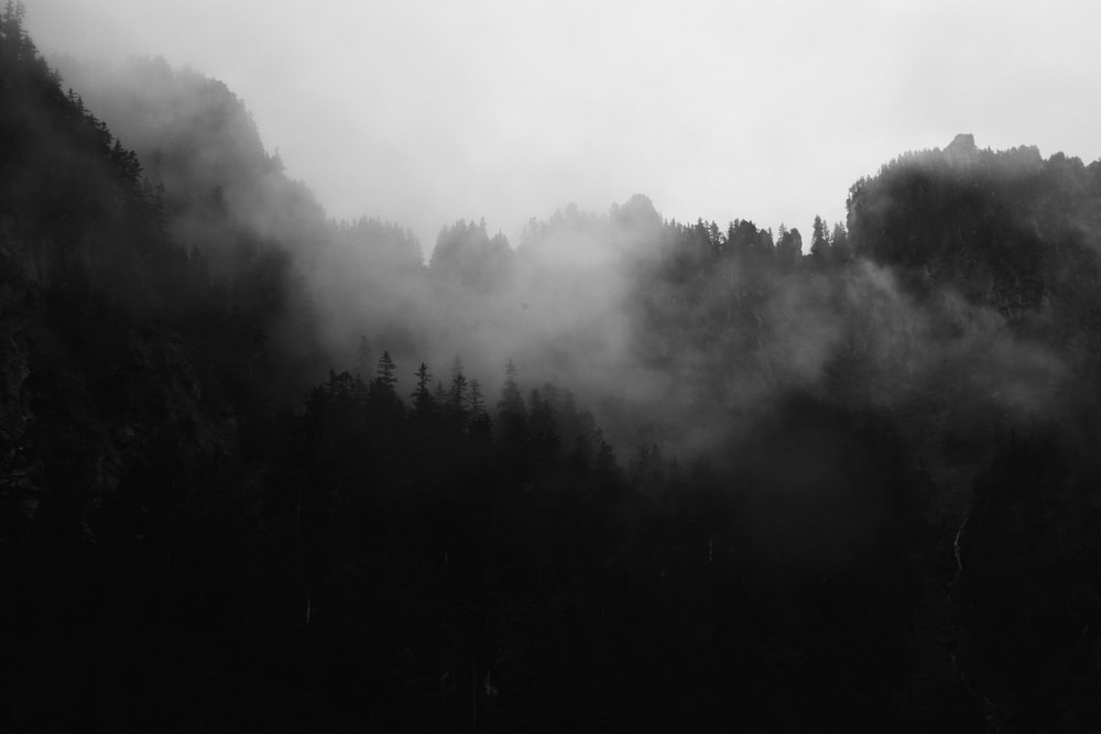 trees surrounded with fogs grayscale poster