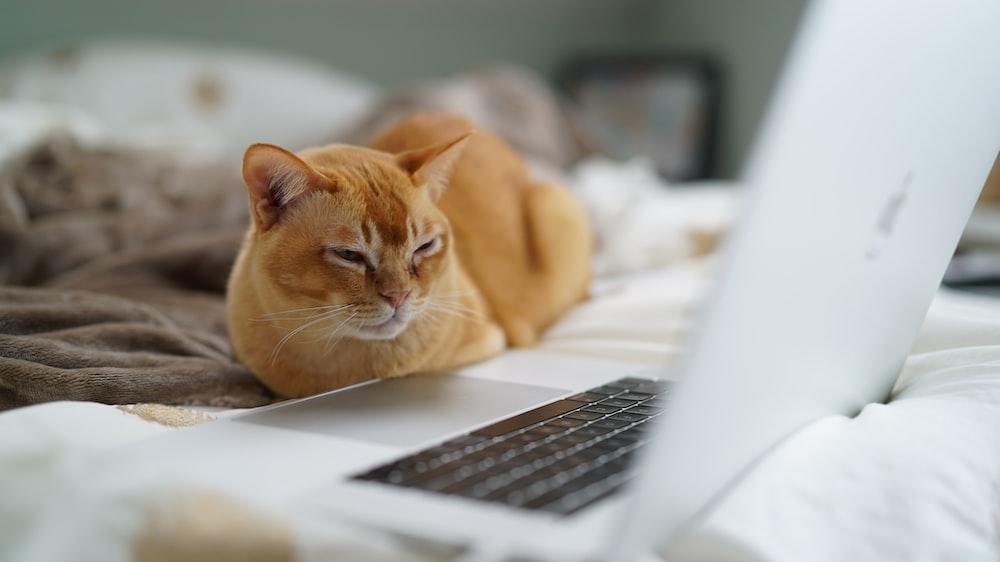 shallow focus photo of orange cat near laptop computer