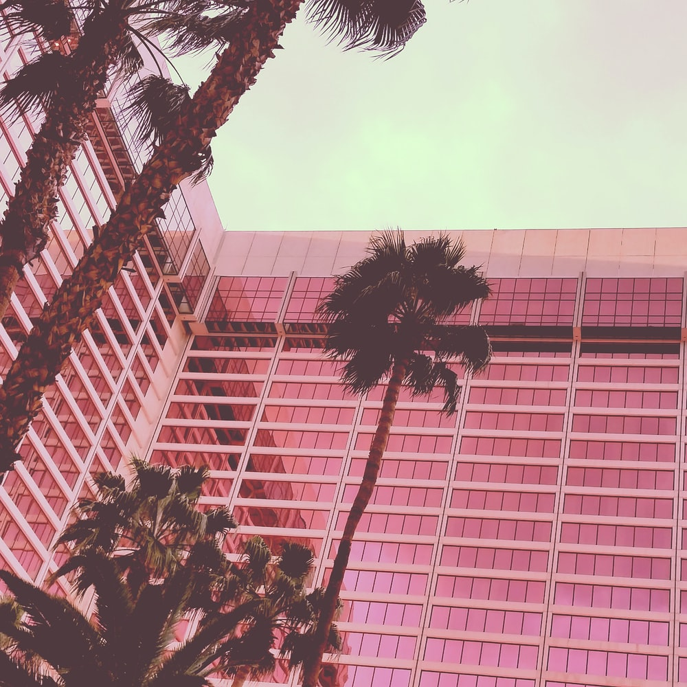 palm trees near building
