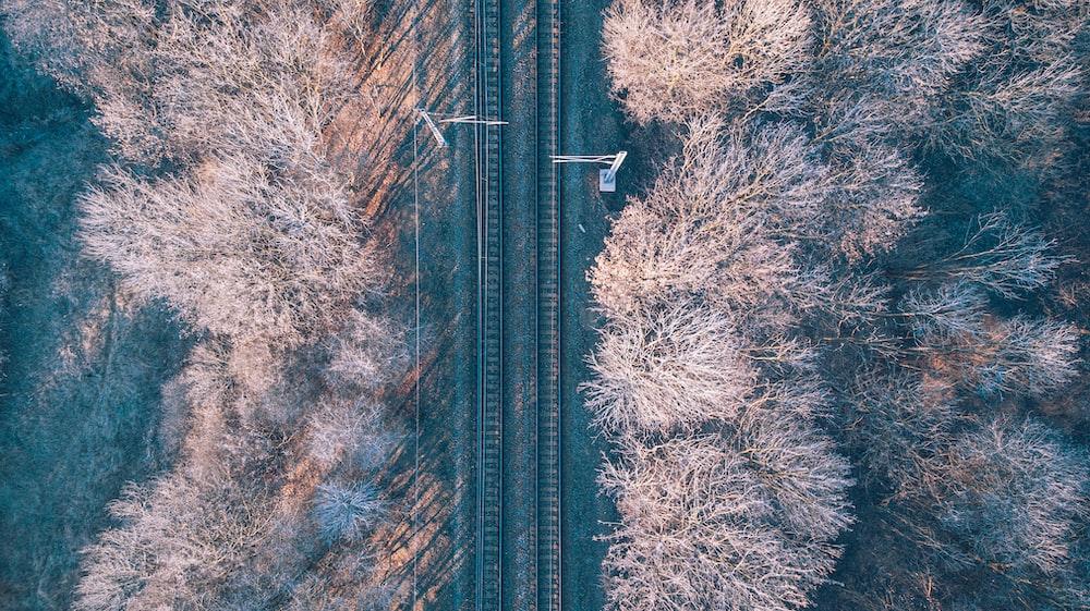 aerial photo of railway in between brown leaf trees during daytime