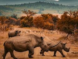 Krüger Nationalpark - Johannesburg