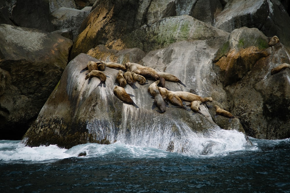 group of sea lions on rock formation near sea during daytime