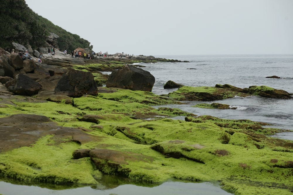 moss-covered stones near body of water during daytime