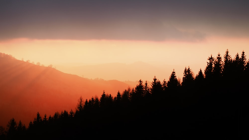 silhouette of trees under orange sky