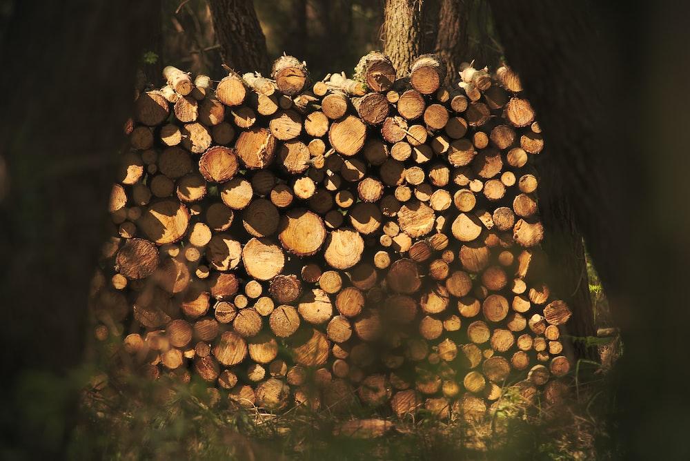 closeup photo of cut trees