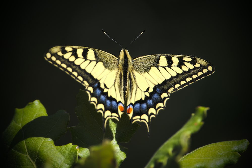 brown and blue butterfly above green leaves