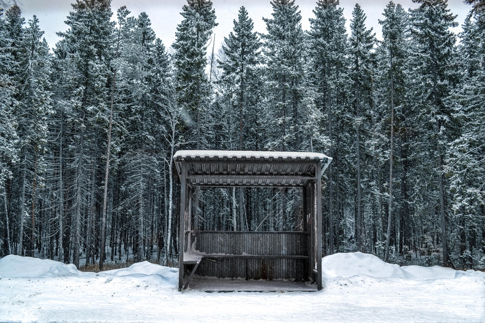 brown wooden tent near snow covered trees