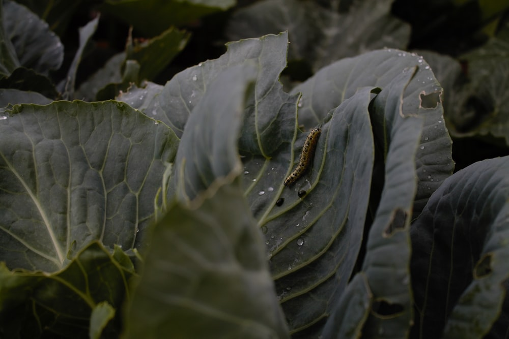 brown worm in green leaf plant