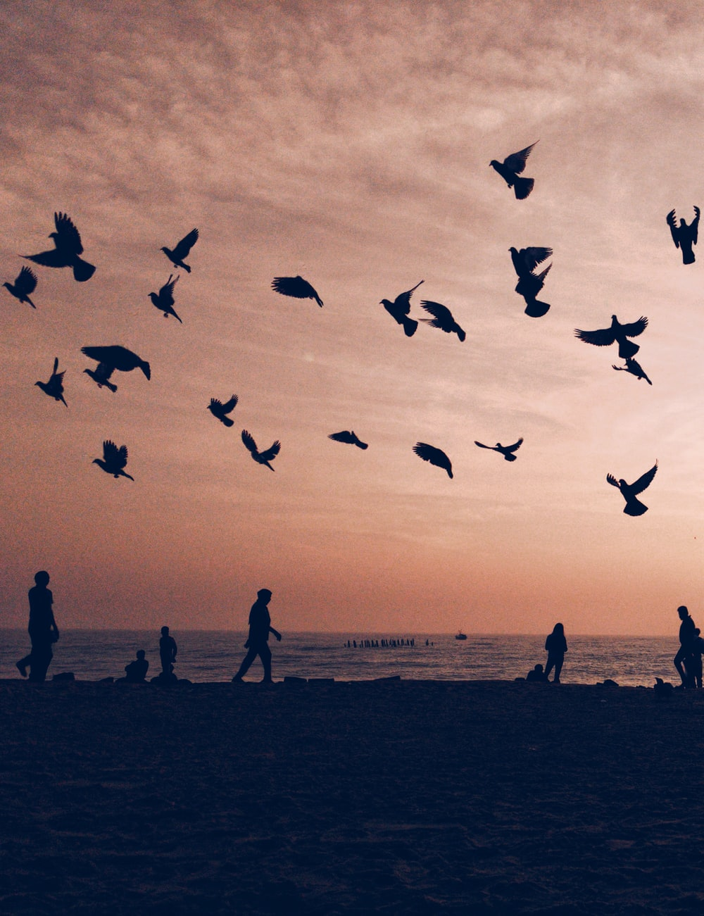 silhouette of flock of birds flying on seashore with people walking and standing during sunset