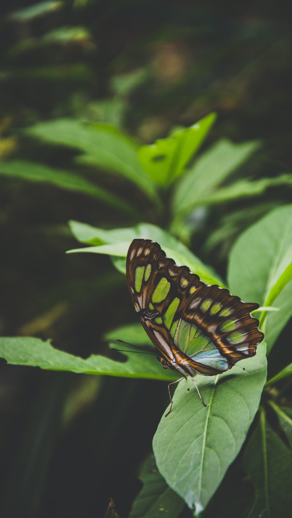 selective focus photography of brown and green butterfly