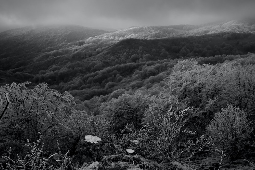 grayscale photography of mountains and trees