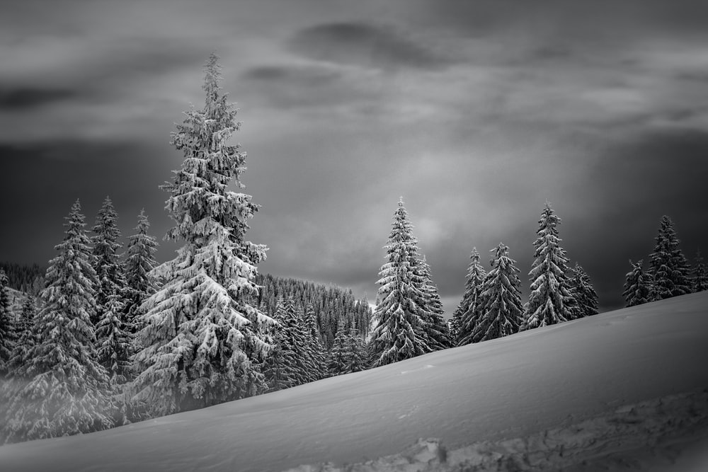 grayscale photo of snow covered mountain and trees