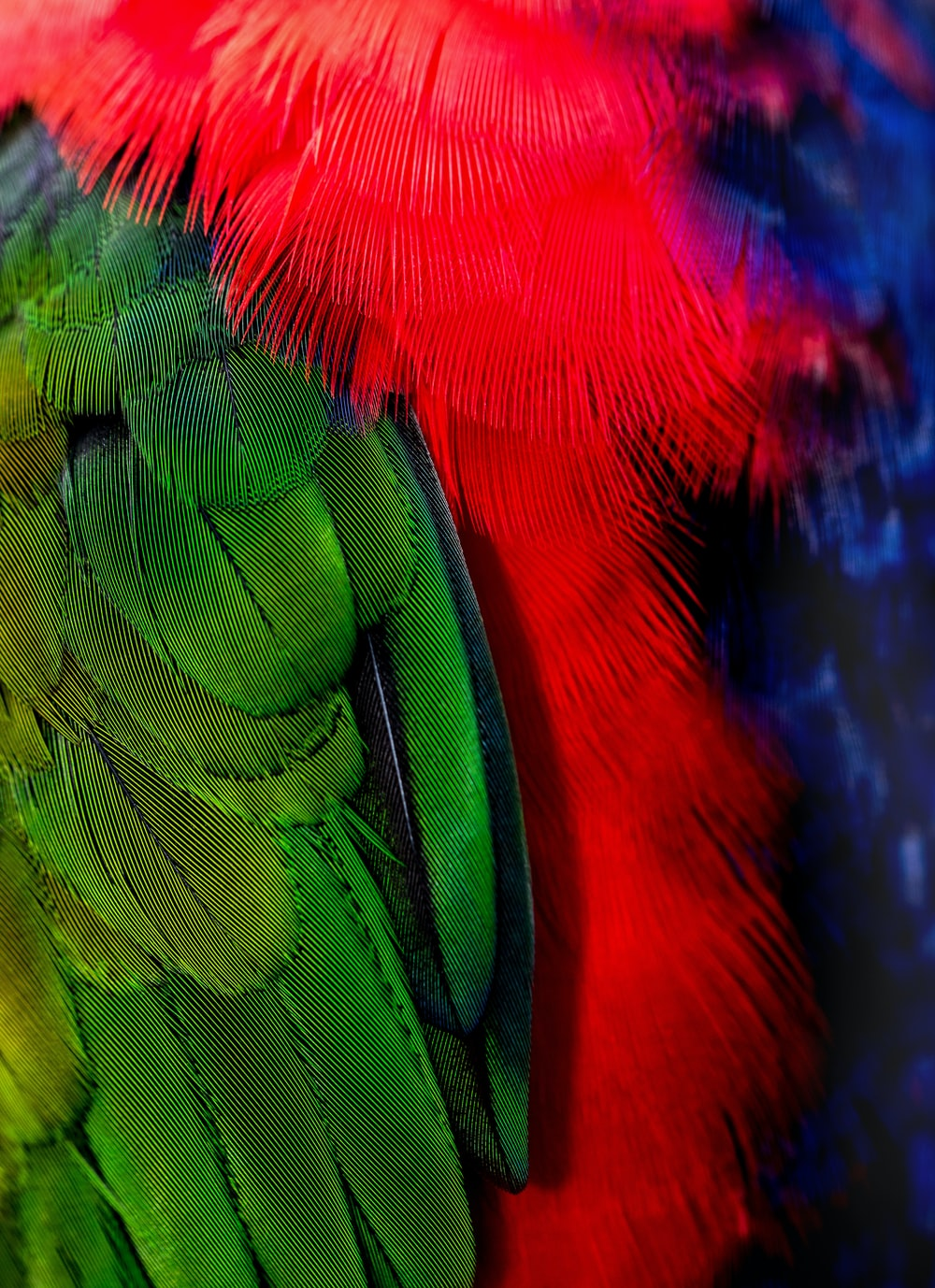 green and red bird tails