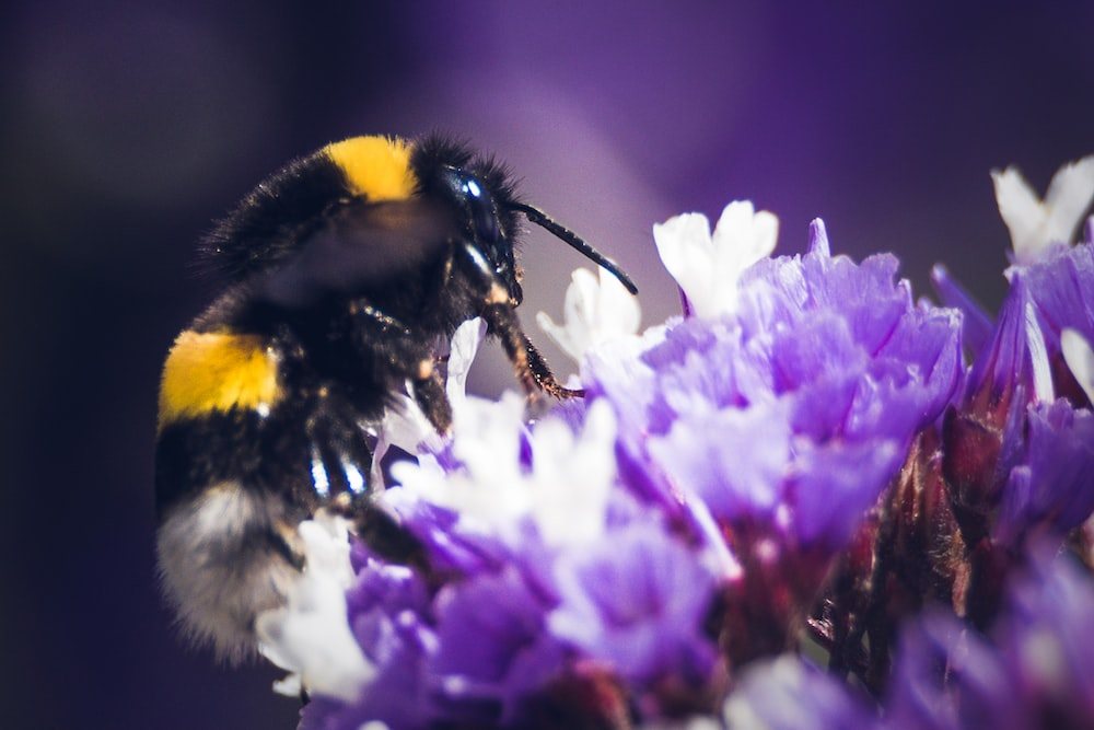 macro photo of bee sipping flowers nectar