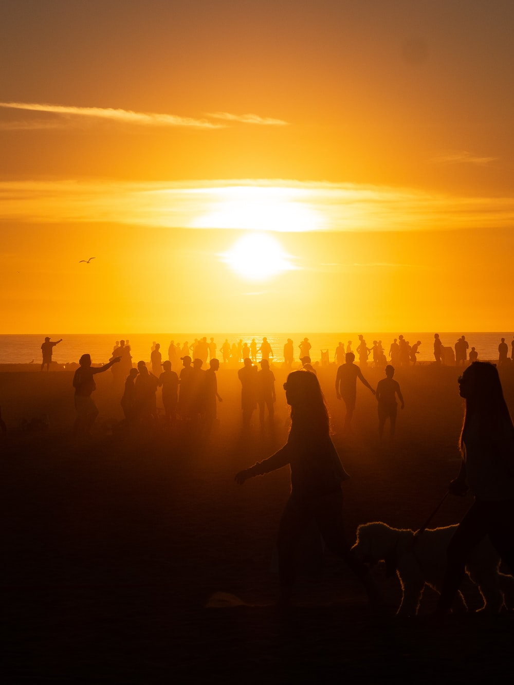 silhouette of people on beach during golden hour