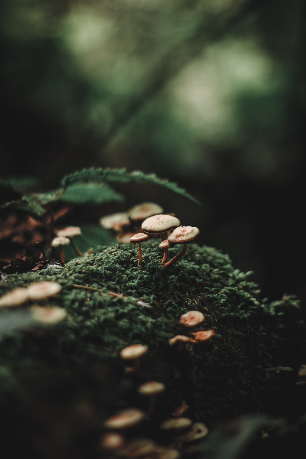 selective focus photography of mushroom
