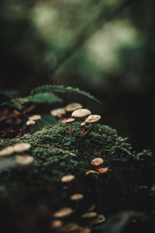 selective focus photography of mushroom