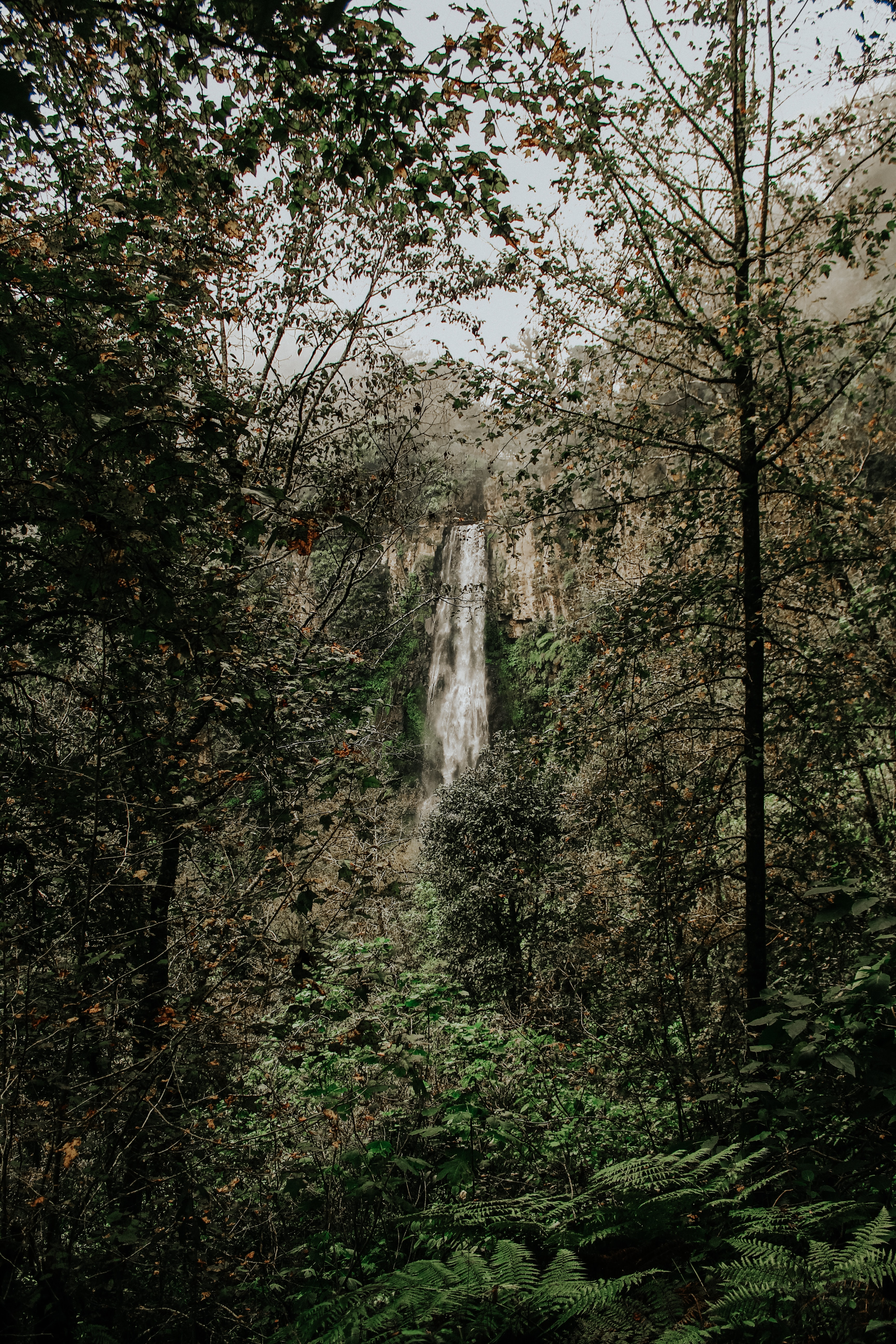 waterfalls by the forest on daylight