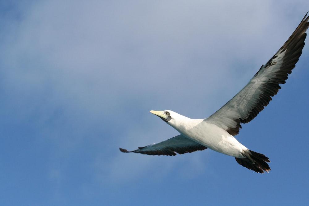 black and white bird flying on sky
