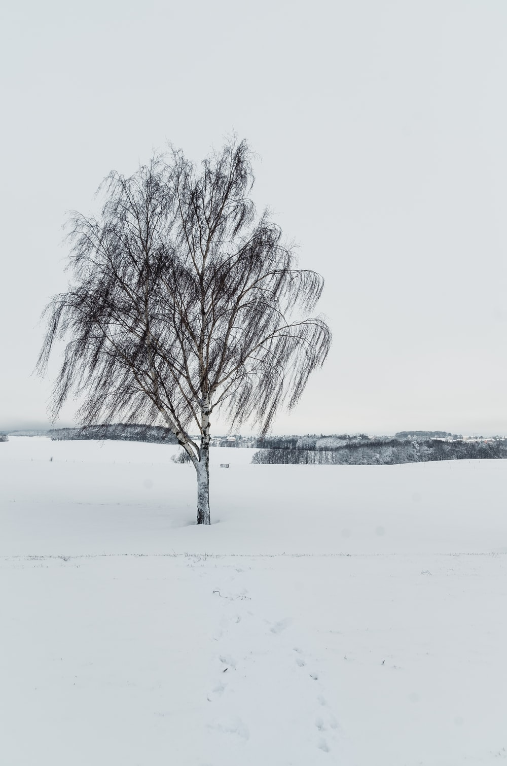 wind blowing on tree on snow filed during daytime