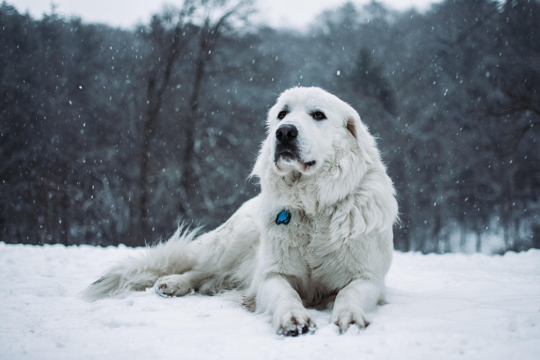 short-coated white dog lying outdoor