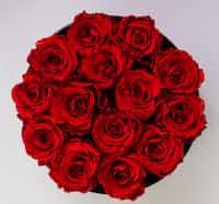 Roses valentinebook2021 stories