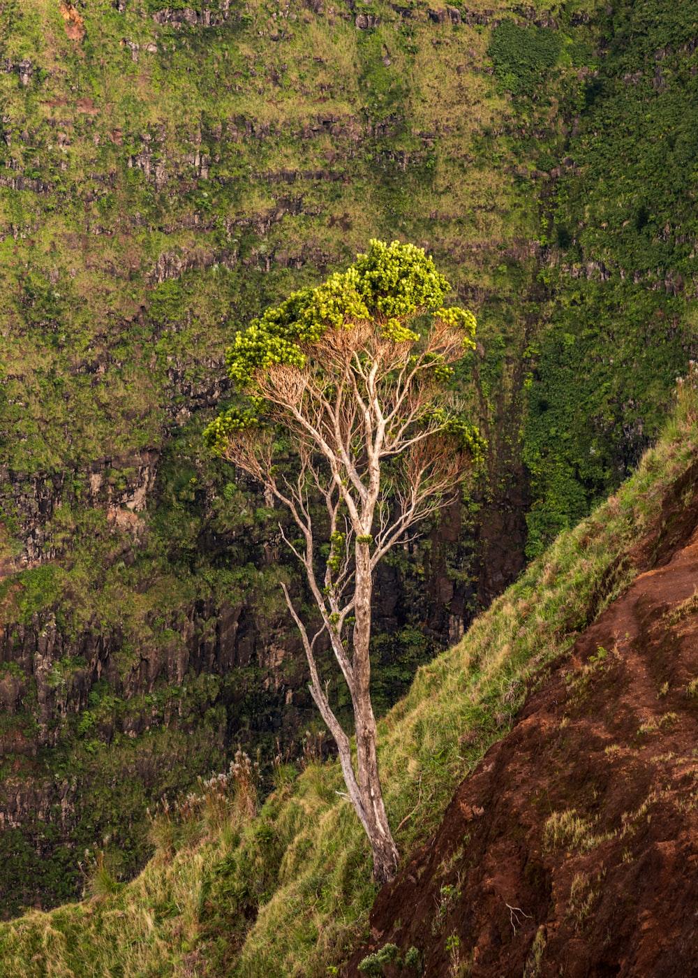 tree during daytime
