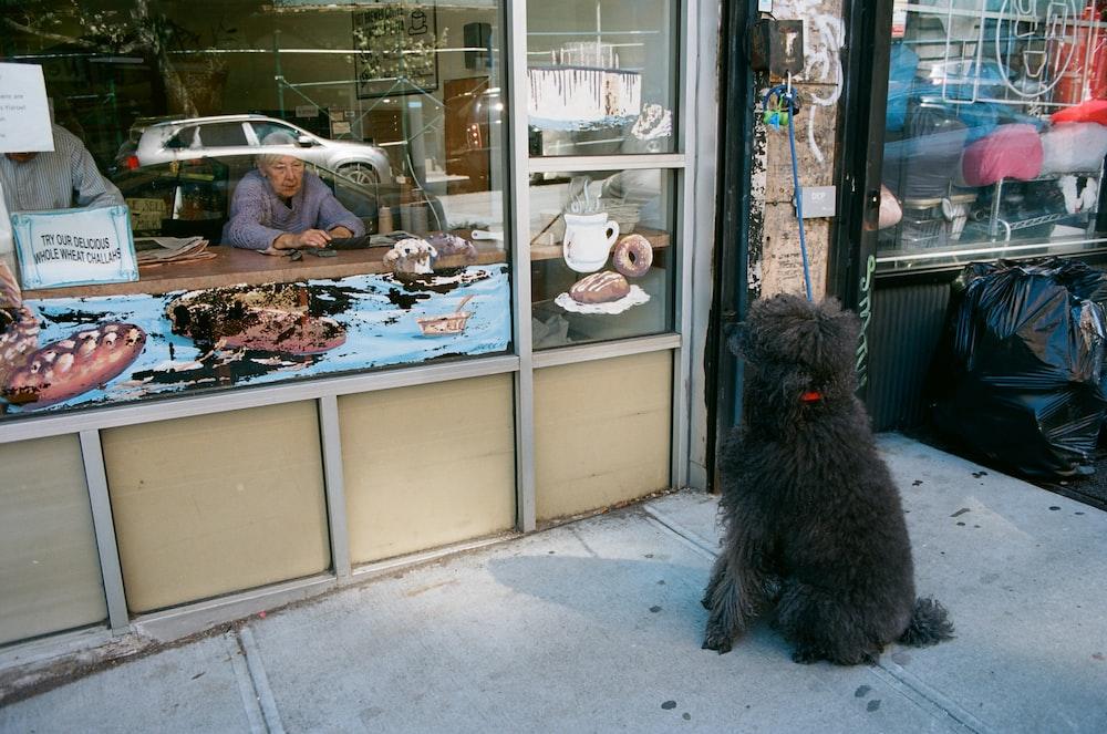 black furry dog