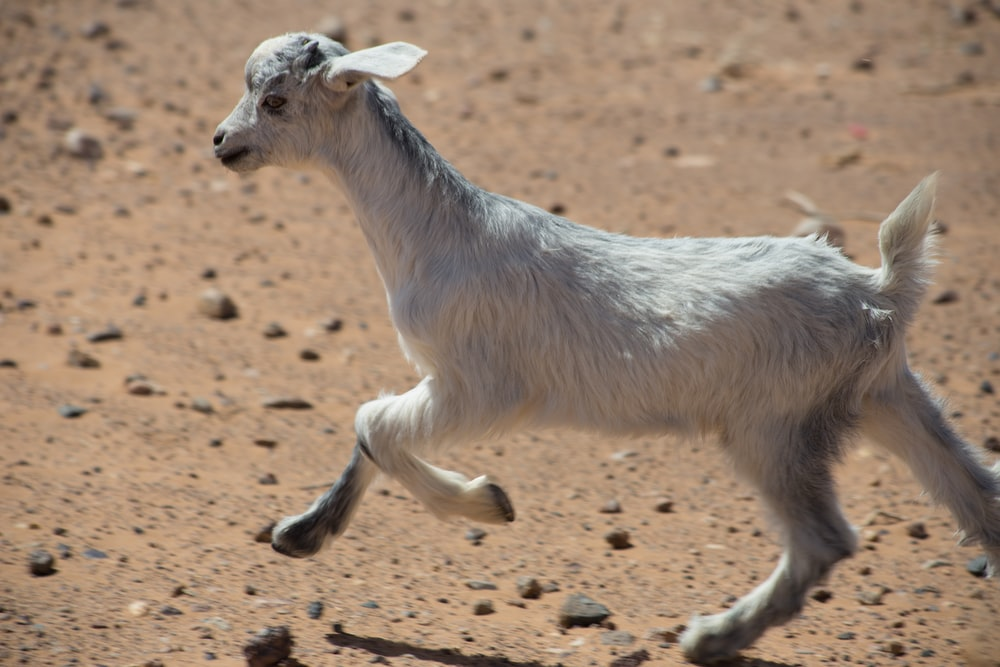 white kid running on brown soil