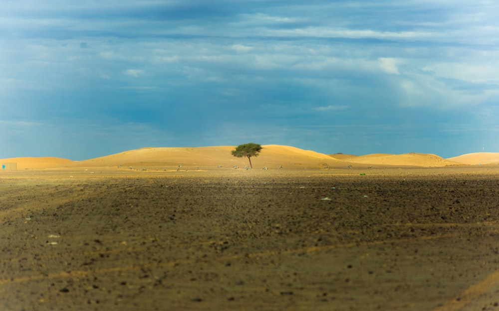 lone tree in middle of desert during daytime