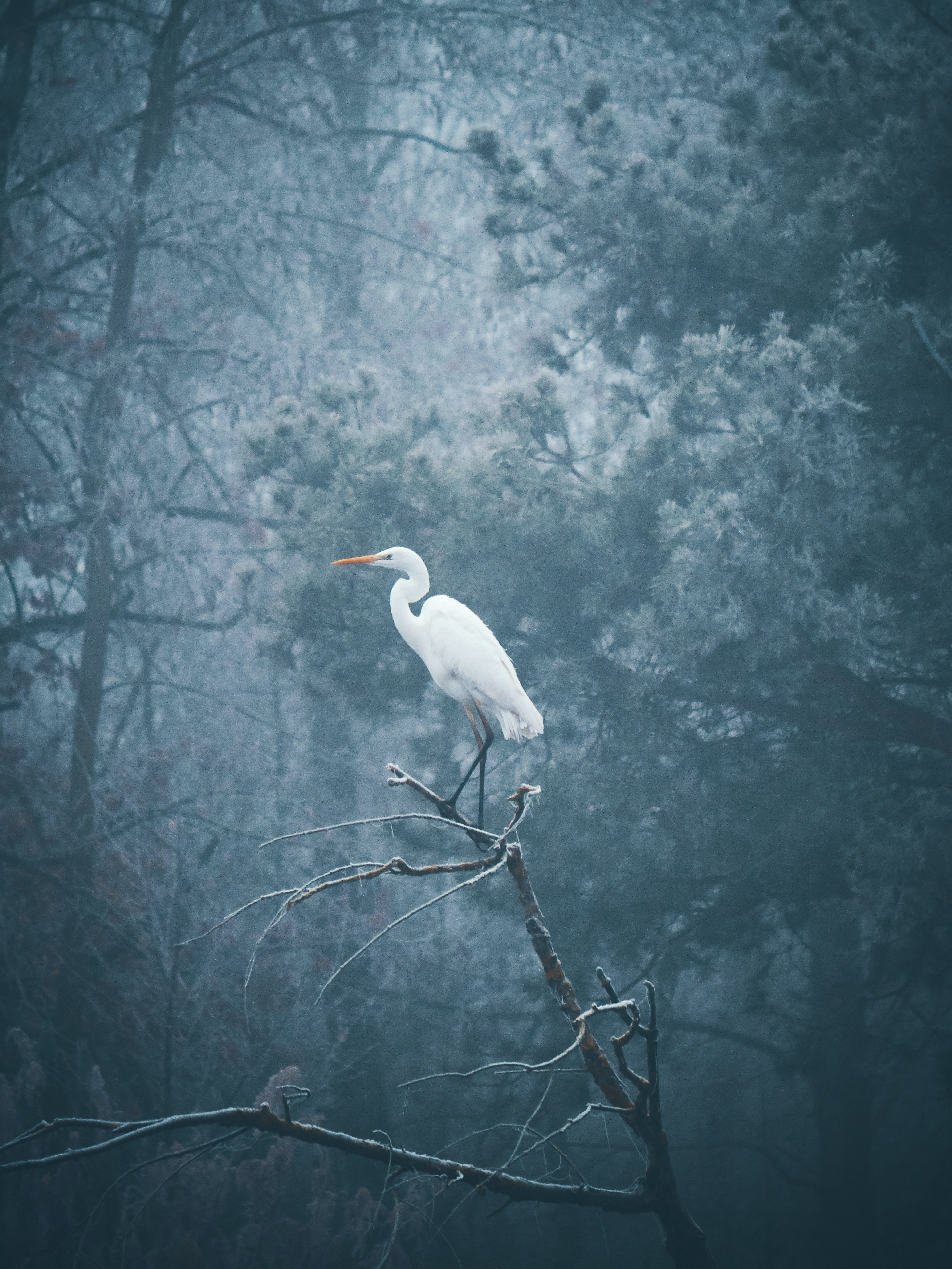 white seagull perched on bare tree
