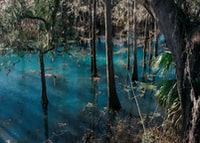 Radium Springs River