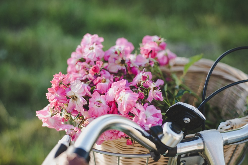 pink and white flower in bicycle basket
