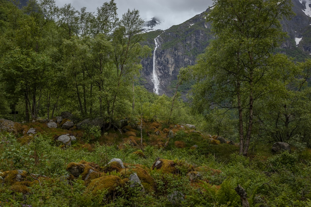 waterfalls in forest under gray sky