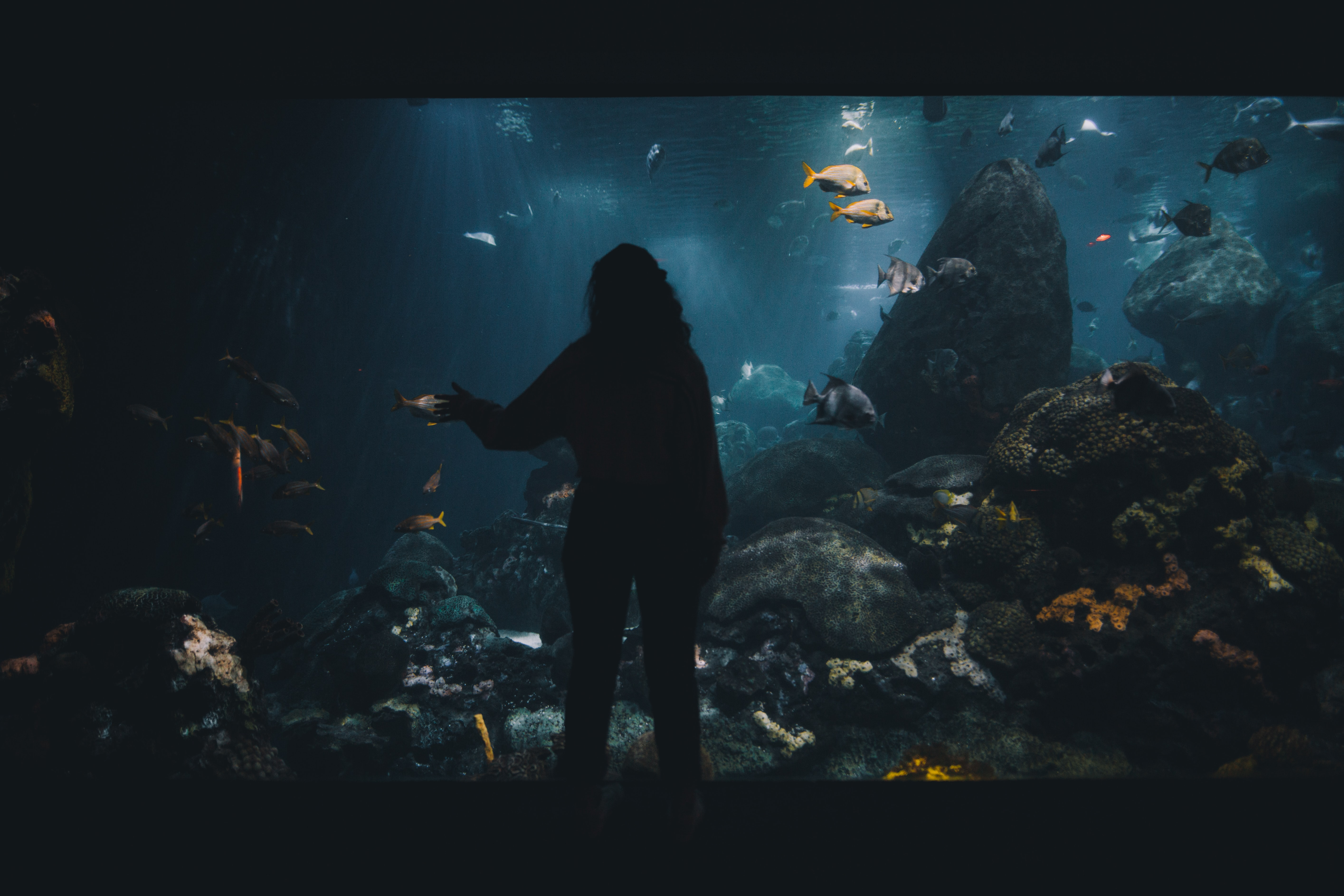 woman facing large aquarium