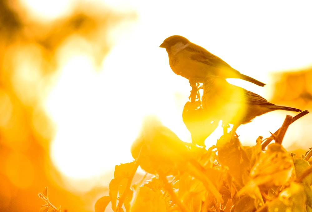 sepia photography of three sparrows perching on plant