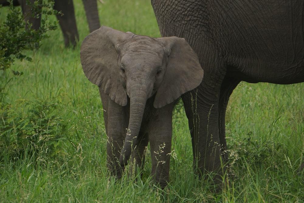 baby elephant on green grass