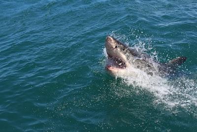 shark zoom background