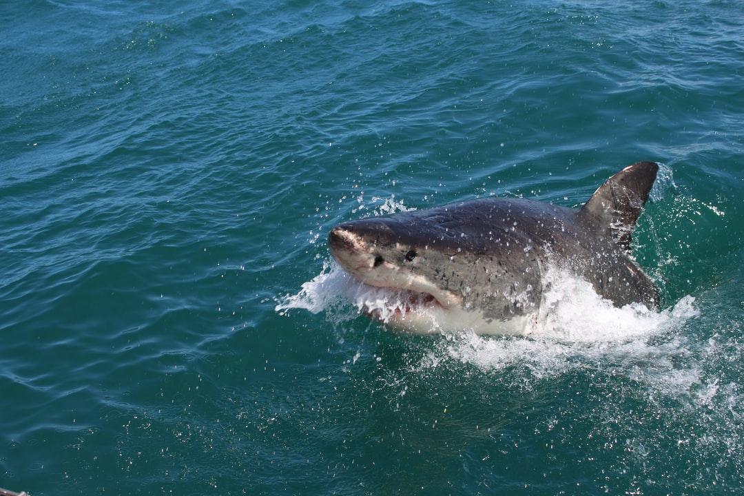 Great White Shark Drags Fishing Boat Around SF Bay For Over An Hour