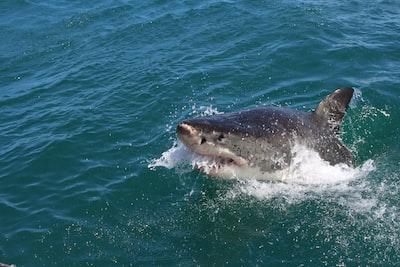 shark on sea