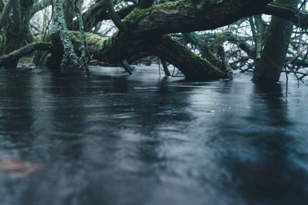 gray wood submerge in water