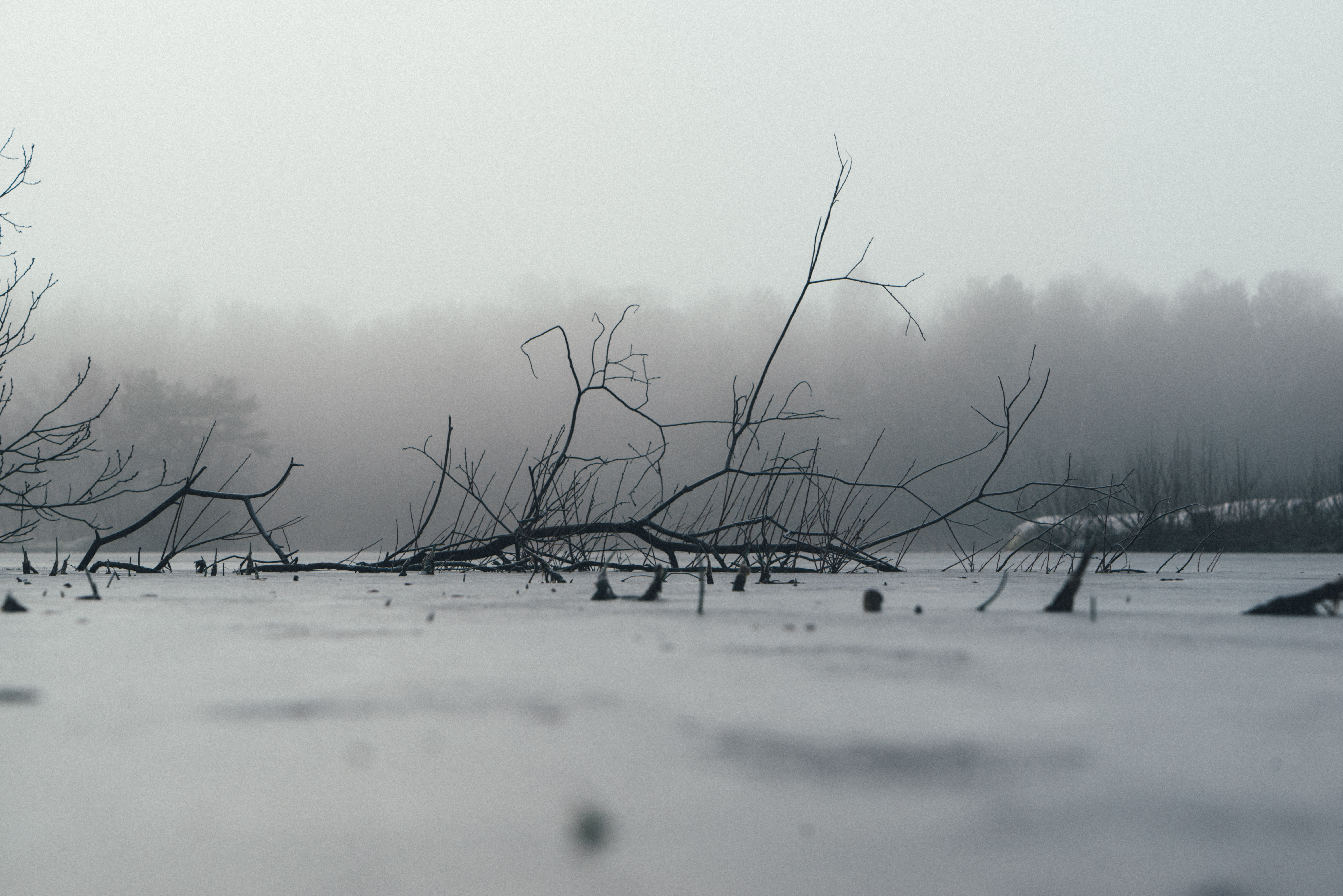 grayscale photography of withered tree